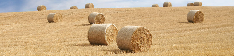 Agricultural Mortgages - Bristol
